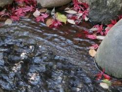 芝公園の紅葉とせせらぎ 2013.12.22