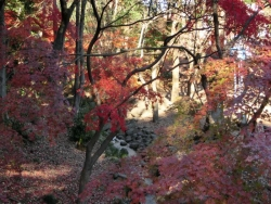 芝公園の紅葉谷 2013.12.22