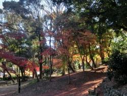 芝公園の紅葉 2013.12.22