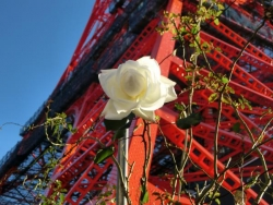 東京タワーとバラ