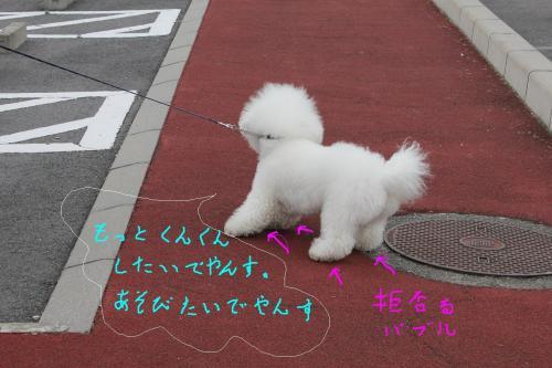 005_20110123170236.jpg