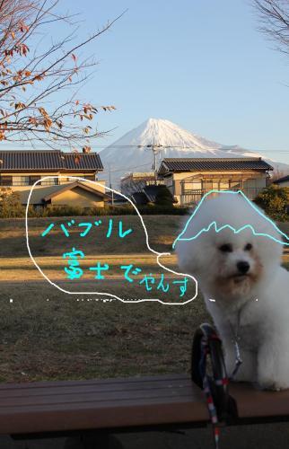 101_20110110103112.jpg
