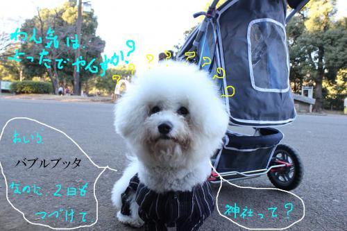 107_20110104100008.jpg