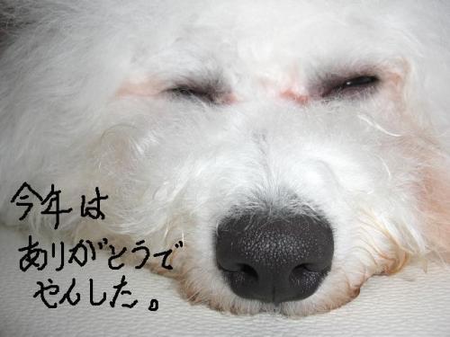 11_20101231005125.jpg