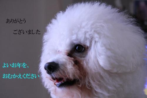 12_20101231005145.jpg
