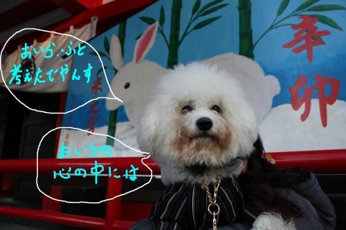 1_20110105112610.jpg
