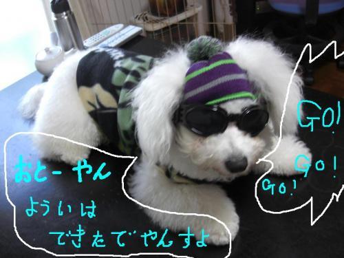 1_20110106191534.jpg