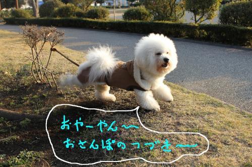 2_20101229182642.jpg