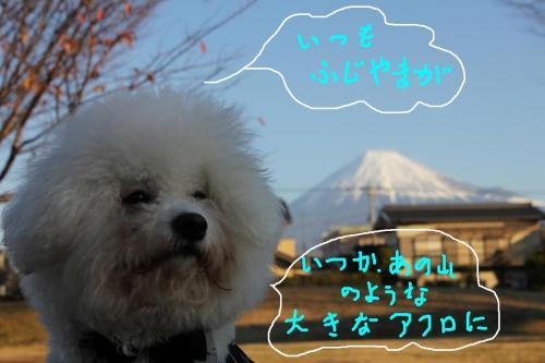 2_20110105112621.jpg