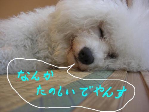 2_20110106191618.jpg