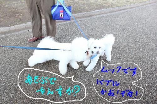 2_20110108132601.jpg