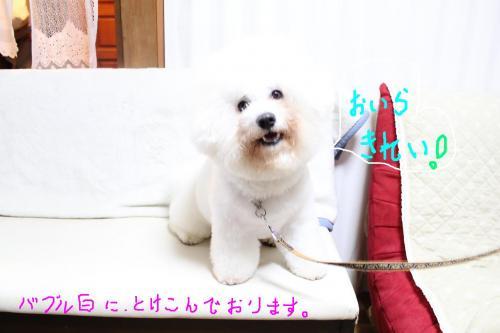 3_20101227105741.jpg