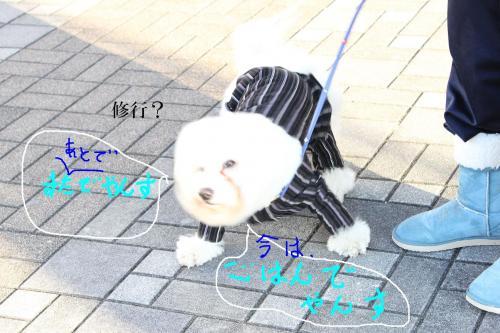 3_20110105112634.jpg