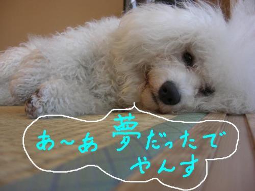 3_20110106191642.jpg