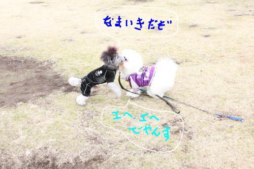 3_20110108132612.jpg