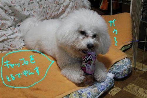 3_20110111091459.jpg