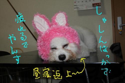 3_20110113184705.jpg