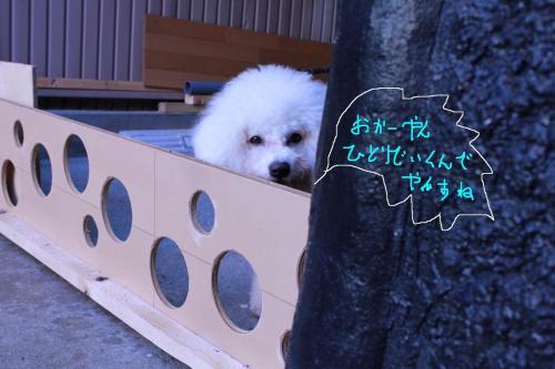 4_20101217083140.jpg