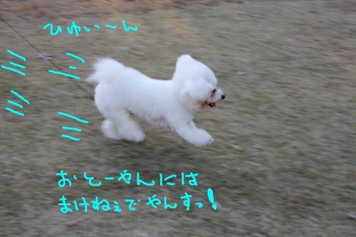 4_20101221155239.jpg