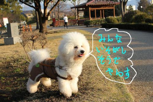 4_20101229182702.jpg