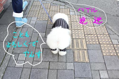 4_20110105112646.jpg