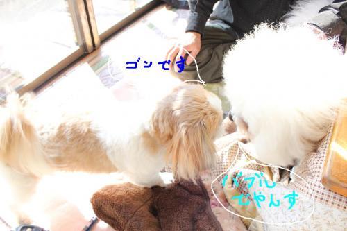 4_20110108132623.jpg
