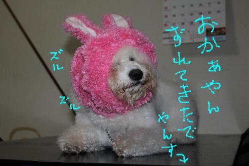 4_20110113184718.jpg