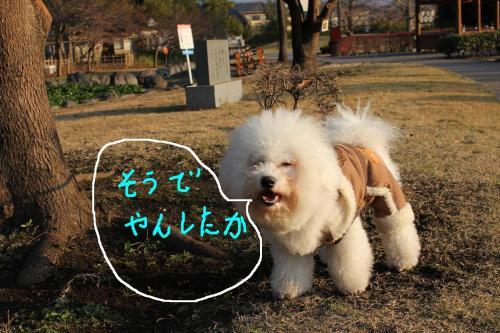 5_20101229182712.jpg