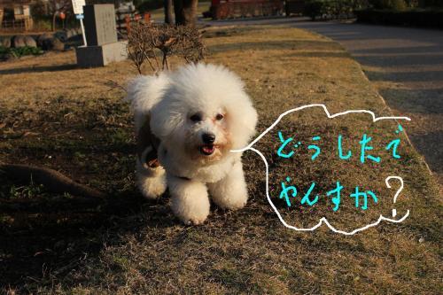 6_20101229182722.jpg