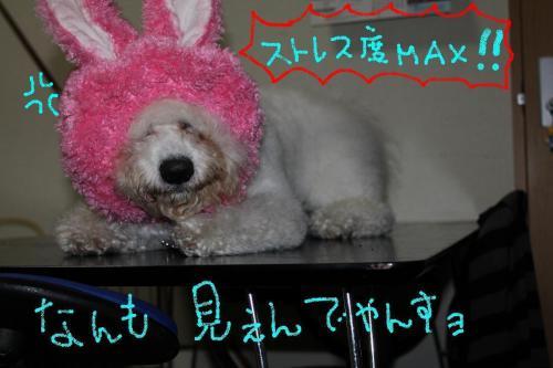 6_20110113184747.jpg