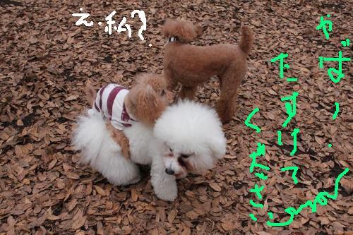 7_20101214184434.jpg