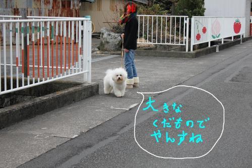 7_20110115211159.jpg