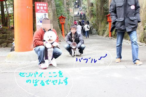 8_20110105112739.jpg