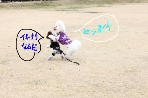 8_20110108132721.jpg