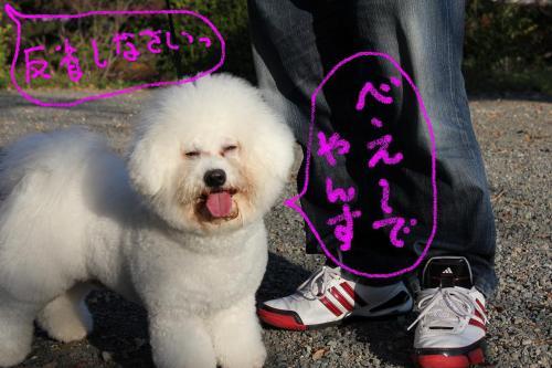 9_20101221155437.jpg