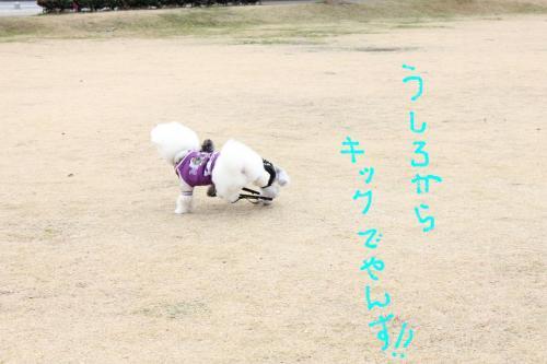 9_20110108132732.jpg