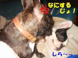 なにするじょ!!!
