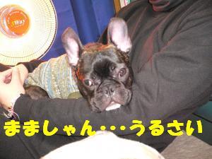 眠れないんですけどぉ・・・(怒)