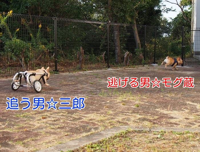 淡路ドッグラン