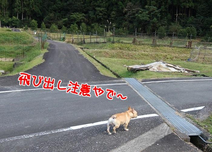 男旅冒険③