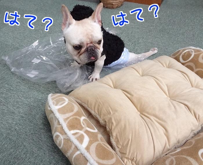冬ベッド④