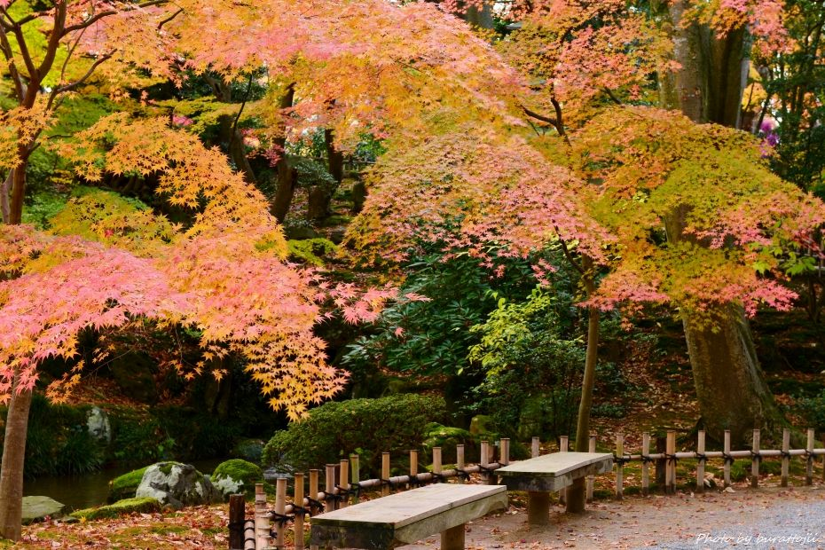 2014.11.20早朝の兼六園4