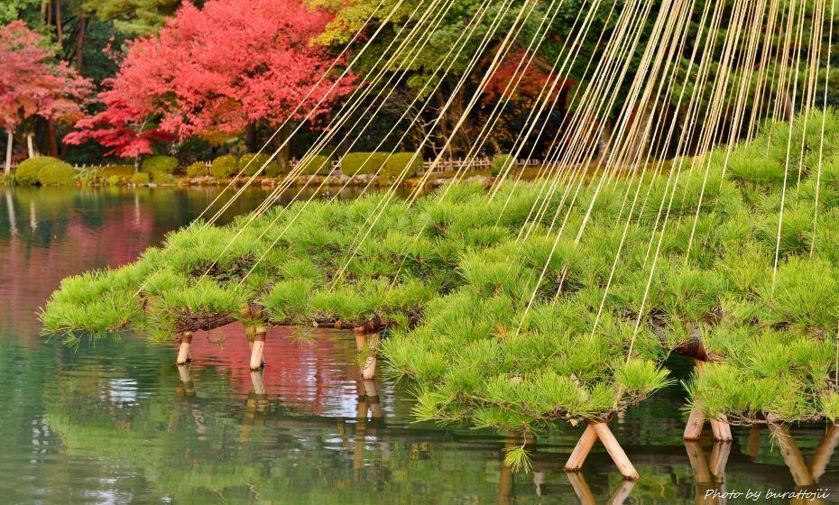 2014.11.20早朝の兼六園3