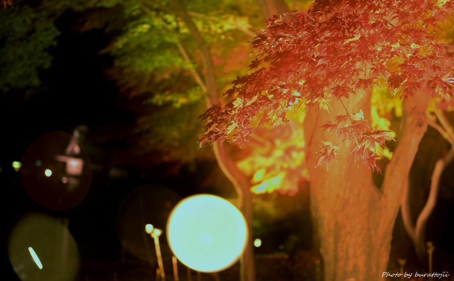2014.11.22金沢城公園のライトアップ4