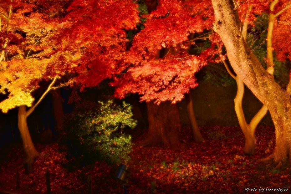2014.11.22金沢城公園のライトアップ3