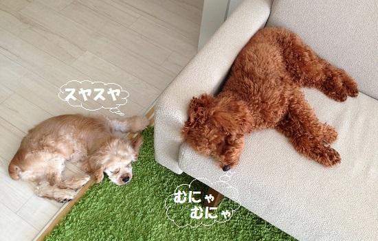 疲れて昼寝