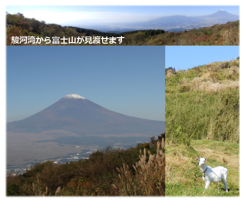駿河湾から富士山が