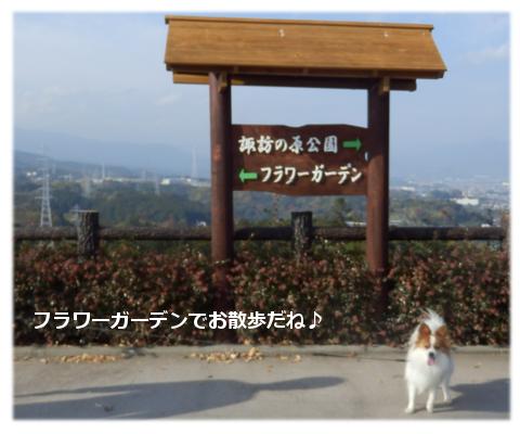 フラワーガーデンでお散歩♪