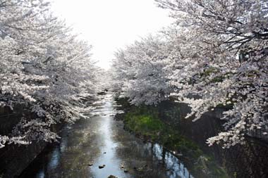 13弁天橋 のコピー