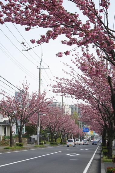 07桜 のコピー